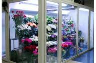 Ремонт холодильных камер для цветов