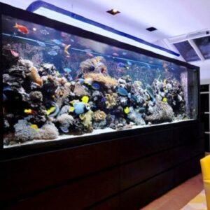 Чиллеры для аквариума
